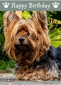 Yorkshire Terrier-Happy Birthday (No Theme)